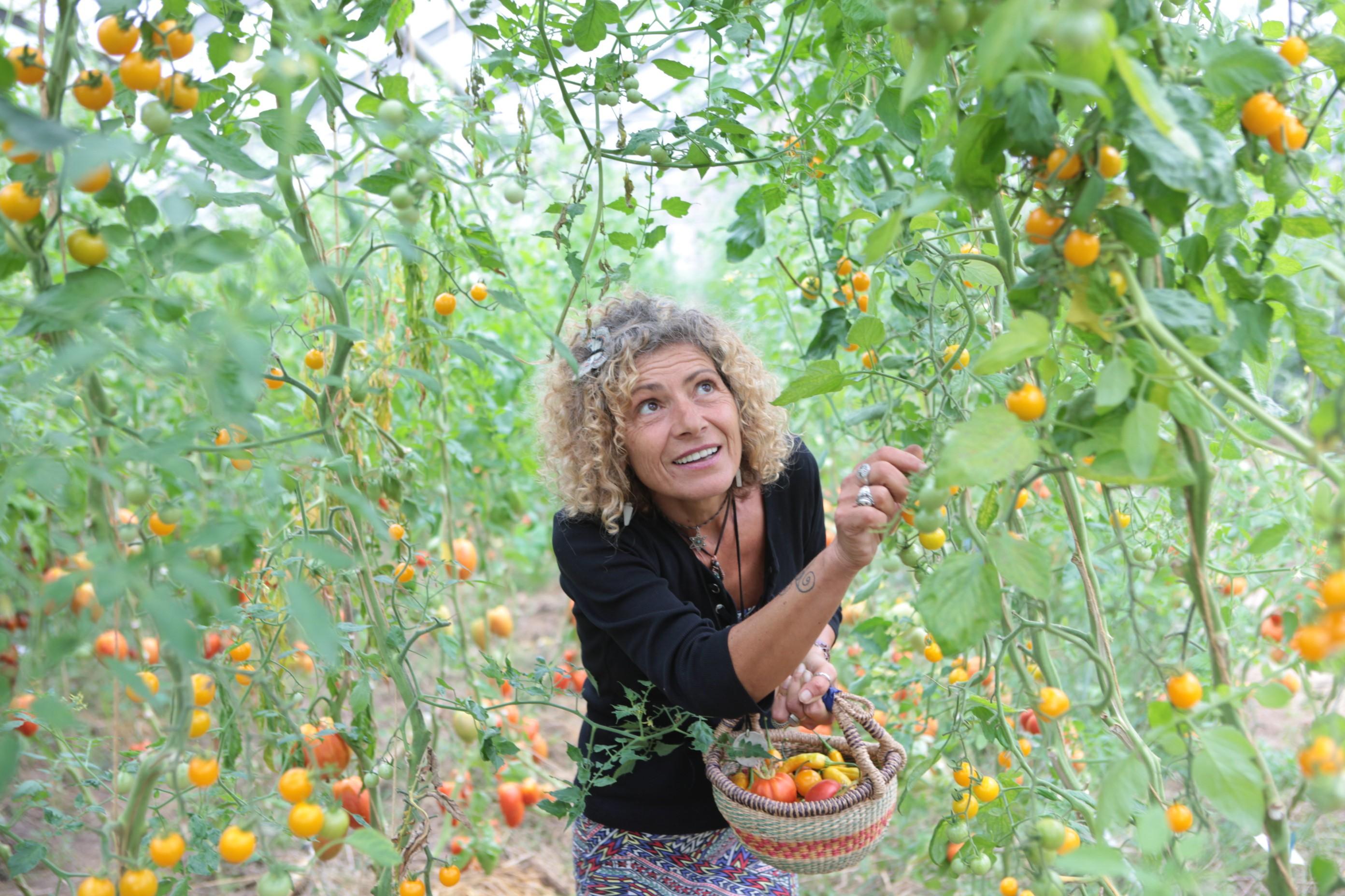 Tomaten-Retter